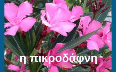 Griekse namen van bloemen
